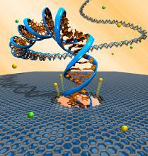 Графеновые наноленты для «чтения» ДНК