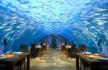 Подводный номер, среди акул