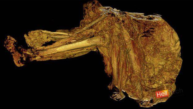 Самые древние останки в мире раскрывают всю правду о жестокости прошлых эпох